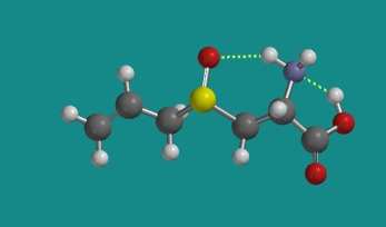 Intramolecular hydrogen bonds in alliin