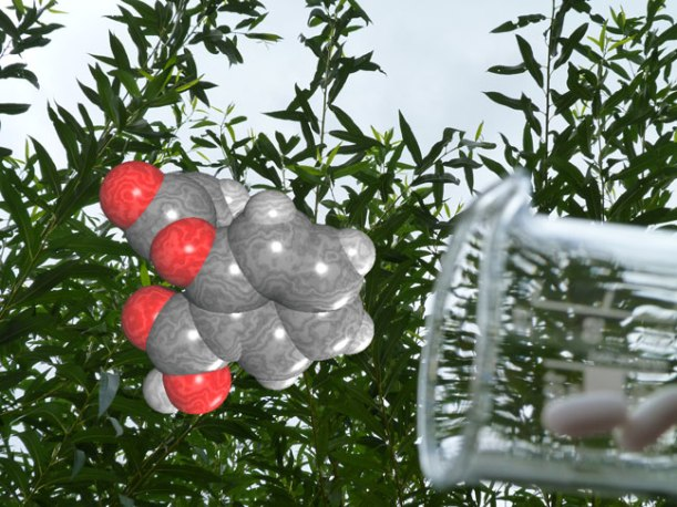 A molecule of acetyl salicylic acid (aspirin) in front of a willow, with a beaker and tablets on the side.