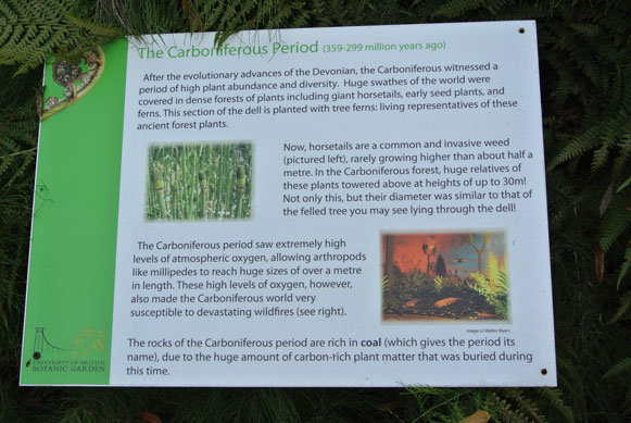 Information board on the Carboniferous.