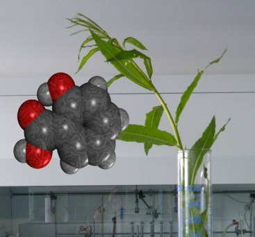 A sprig of willow together with a molecule of salicylic acid.