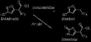 Ibotenic acid - a precursor to toxic compounds.