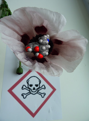 Poppy flower, morphine and an appropriate warning!