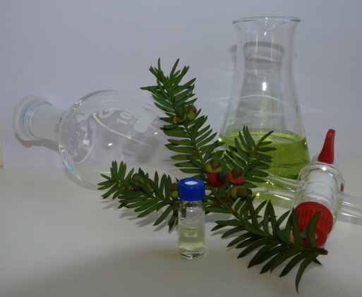 Yew (Taxus baccata), together with some common laboratory equipment - a separating funnel, a conical flask and a sample bottle.