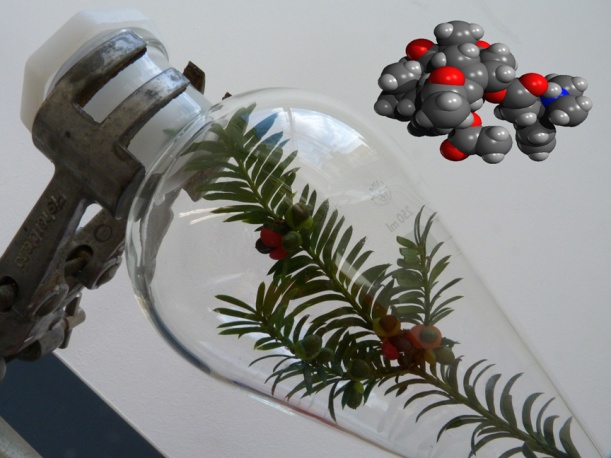 A sprig of yew (Taxus baccata) in a separating funnel, together with the molecular structure of taxine A.