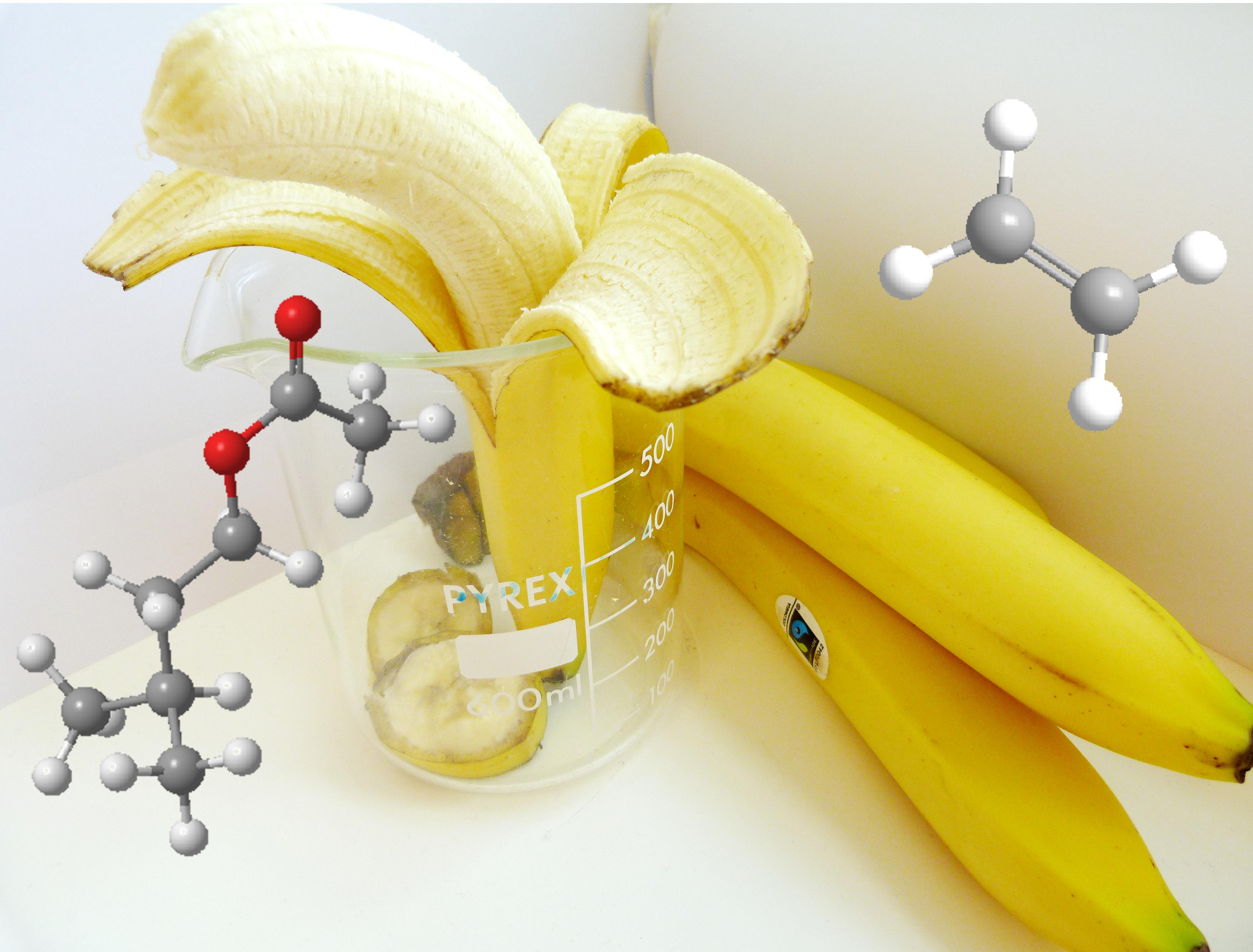 synthesis of isopentyl acetate banana oil Synthesis isopentyl acetate (banana oil) from isopentyl alcohol, acetic acid, sulfuric acid, and heat with purity of 10% alcohol and 2% acetic acid.