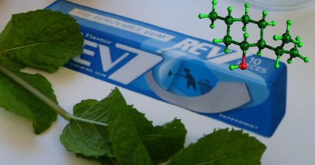 Mint leaves and the molecular structure of (-)-menthol in minty-fresh colours.