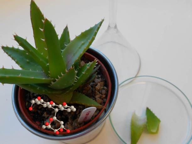 An aloe plant with glassware and a molecule of aloin.
