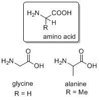 The amino acid molecule; two natural examples, glycine and alanine.