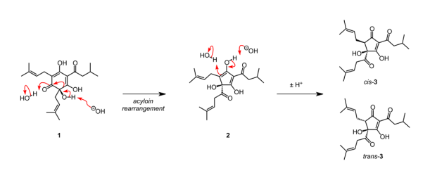 Recently refined proposal for the mechanism of isomerisation of humulone (1) to isohumulone (3) via intermediate (2).