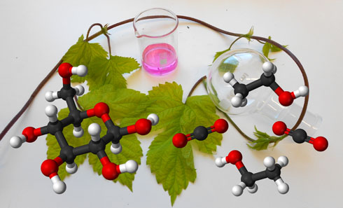 Hops with a beaker containing a pink solution and a molecule of glucose (left) alongside its fermentation products (right) carbon dioxide and ethanol