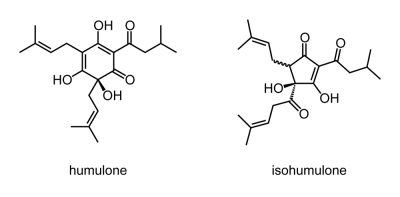 Skeletal formulae of humulone and isohumulone, two substances responsible for the bitter taste of beer.