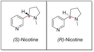 Figure 2. The structures of (s)- and (r)-nicotine. The chiral carbon is highlighted by the red asterisk.  In (s)-nicotine, the hydrogen coming off this carbon is pointing towards us, whereas in (r)-nicotine it is pointing away from us.  These two structures are non-superimposable and thus different from each other.