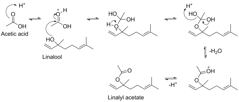 formation of linalyl acetate