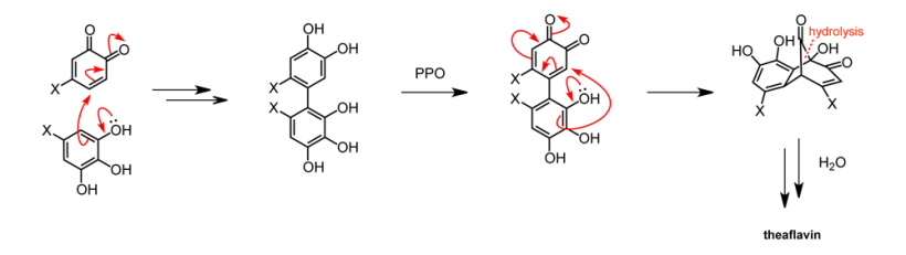 One proposed mechanism for theaflavin formation in black tea. A benzenetriol attacks an ortho-quinone, forming a biphenyl species. The biphenyl is further oxidised by polyphenol oxidase (PPO) to form a bridged intermediate that decomposes to theflavin.