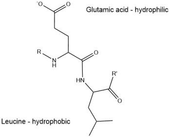 hydrophilic-hydrophobic-protein